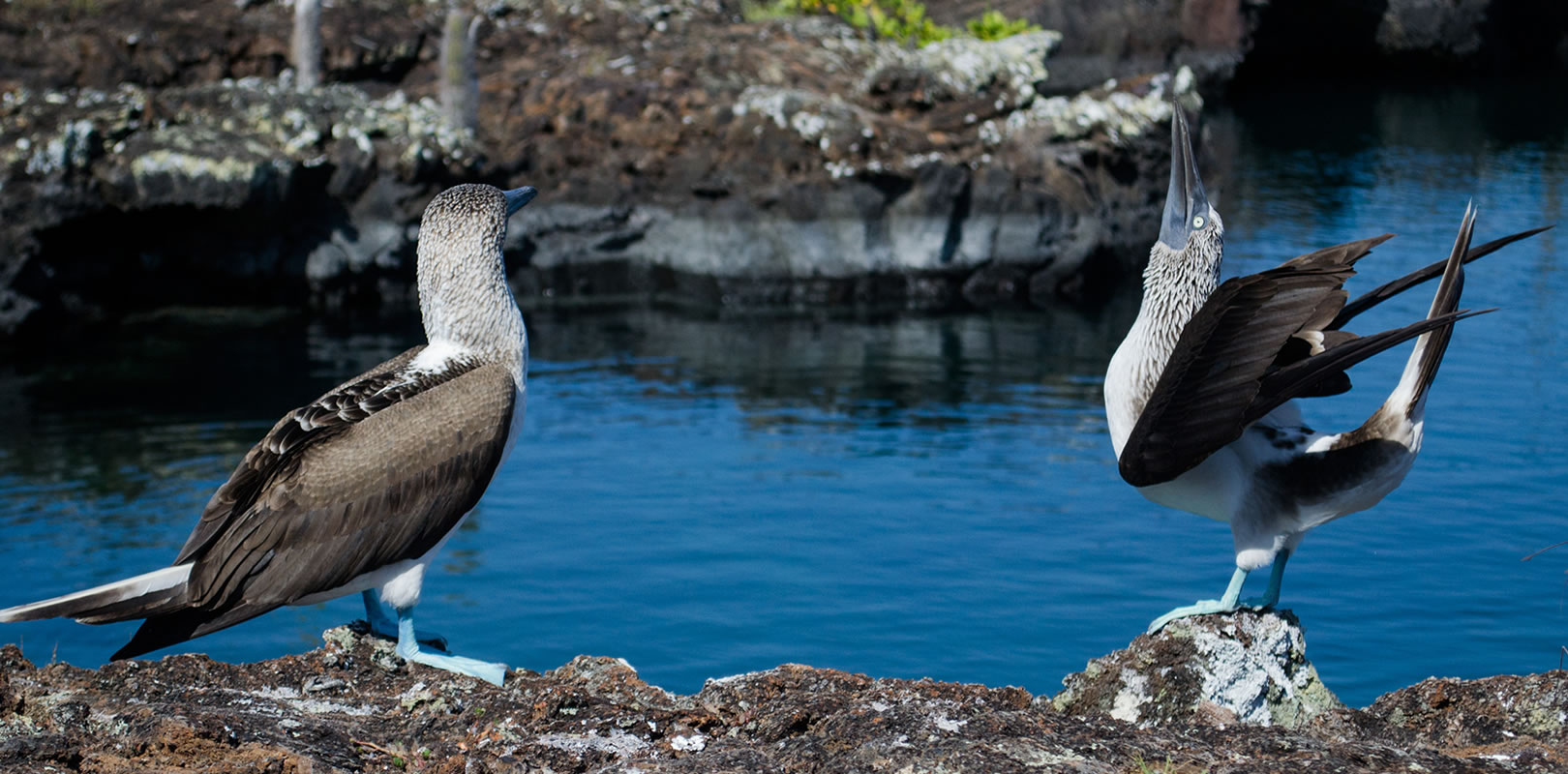 Day trip to Tunnels Cabo Rosa - Galapagos tours by #ChokoTrip
